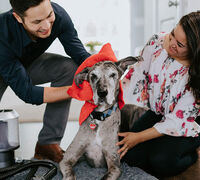 Skip a Trip to the Groomer with these 4 Must-Have Pet Care Products