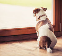 Prepare Pets for Your Return to Work with These Expert Tips
