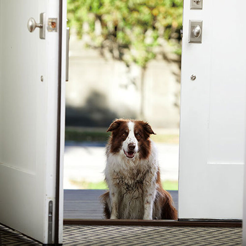 Bark Bath Portable Dog Cleaner 1844 BISSELL Muddy Dog